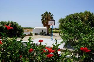 gallery zanneta studios basketball